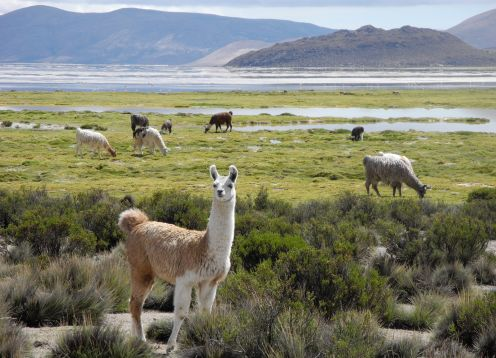 Las Vicunas National Reserve