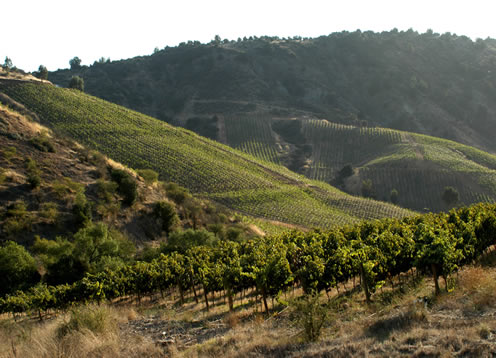 Cachapoal Valley, Rancagua - CHILE