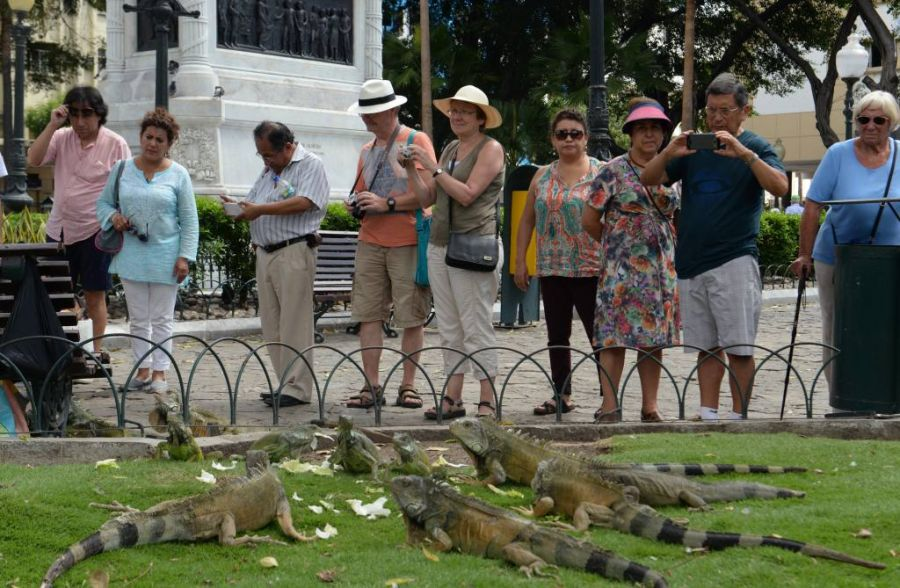 Parque Seminario also known as the Parque de las Iguanas, Guayaquil, Ecuador. what to see, what to visit , ECUADOR