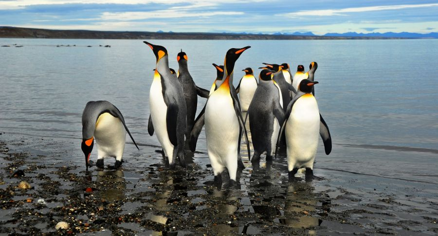 Pinguino Rey Park, Punta Arenas, Information, how to get there, what to see, Porvenir, Chile Porvenir, CHILE