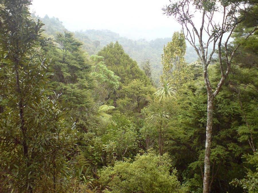 Waitakere Ranges Regional Park, Auckland, New Zealand. Guide, Information , New Zealand