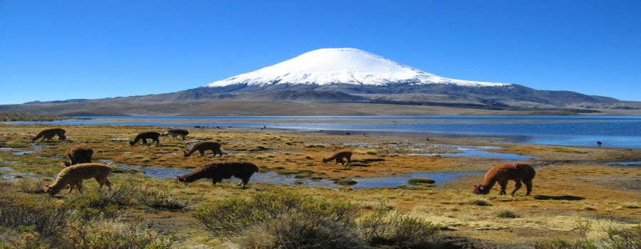 Lauca National Park,  Lake Chungara, Hiking, walking, Chung, Lauca, Arica, Putre Putre, CHILE