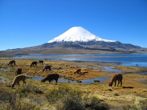 Lauca National Park, Putre