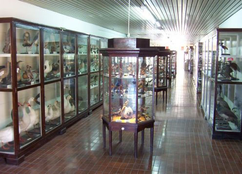 Museum of Natural Science Domingo Faustino Sarmiento