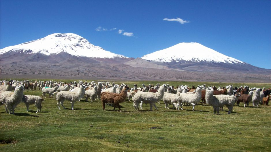 LAUCA NATIONAL PARK AND SALAR SURIRE, ,