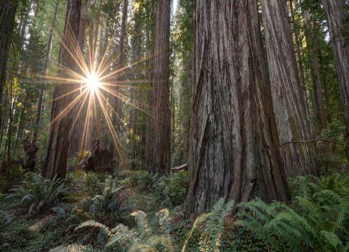 Excursion In San Francisco To Know Redwoods  And Wines,