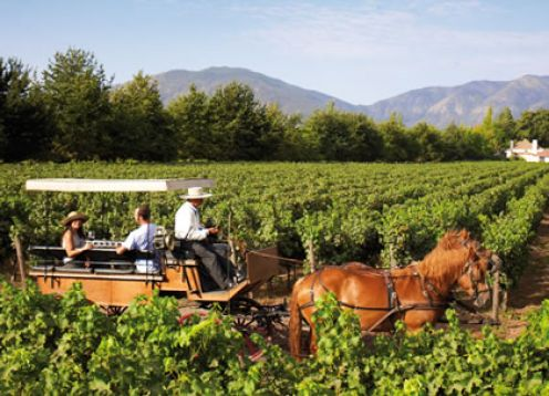 WINE TOUR - COLCHAGUA VALLEY. Santiago, CHILE