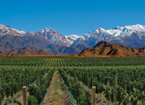 WINE TOUR 1/2 DAY IN MENDOZA. Mendoza, ARGENTINA