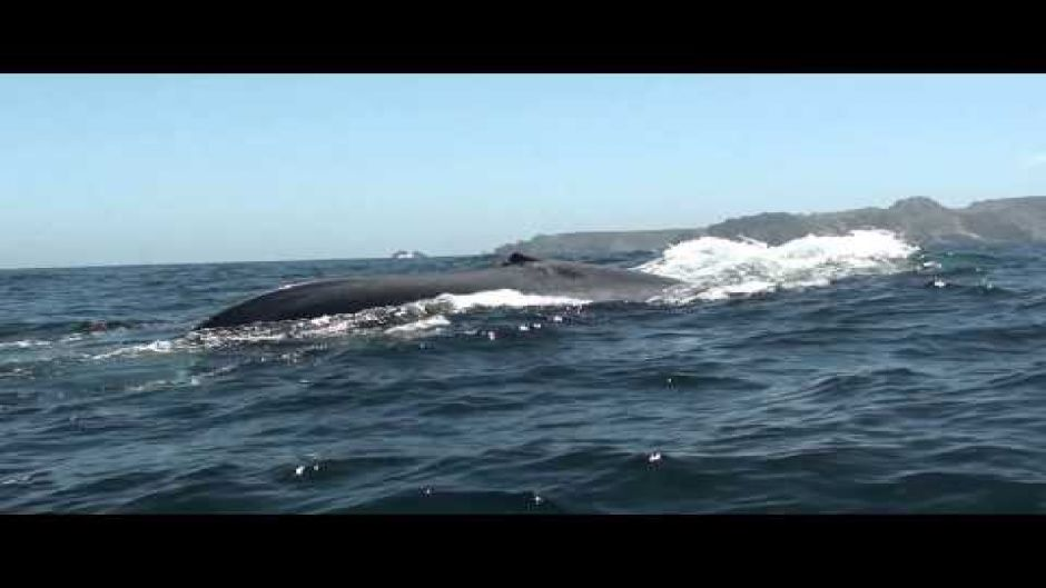 Chañaral  de Aceituno Tour ?? (Whale watching) - La Serena, Chile