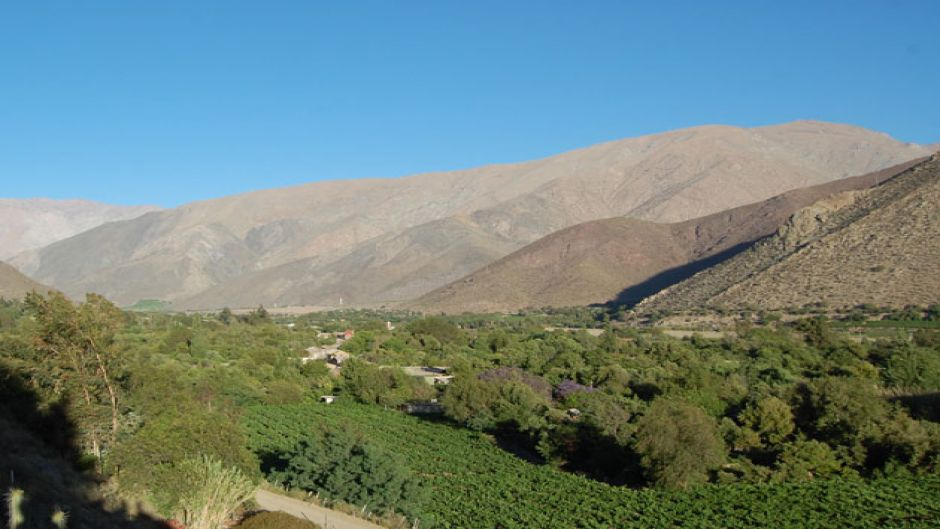 Pisco Route Tour, Elqui Valley  - La Serena, Chile