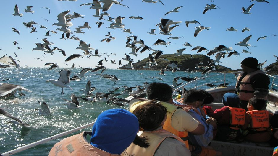 CHILOE ISLAND; ANCUD AND PINGUINS OF PUÑIHUIL - Puerto Varas, Chile