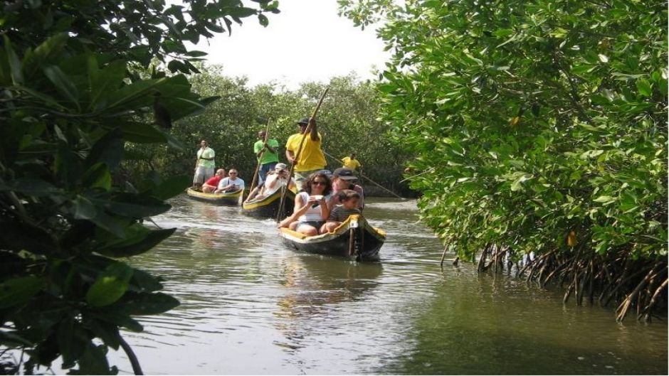 Boquilla Mangrove Morning Tour - Cartagena de Indias, COLOMBIA