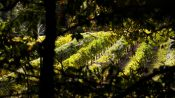 Excursion in San Francisco to know Redwoods  and Wines - San Francisco, ESTADOS UNIDOS