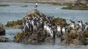 CHILOE ISLAND; ANCUD AND PINGUINS OF PUÑIHUIL, Puerto Varas, CHILE