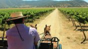 CASABLANCA VALLEY WINE TOUR - Santiago, Chile