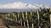 WINE TOUR 1/2 DAY IN MENDOZA - Mendoza, ARGENTINA