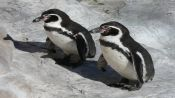 TOUR ISLA DAMAS, HUMBOLDT PENGUIN NATIONAL RESERVE - La Serena, Chile