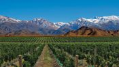 WINE TOUR, MENDOZA DOWNTOWN AREA - Mendoza, ARGENTINA