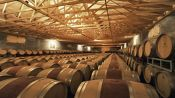 Portillo and San Esteban Winery, become a winemaker - Santiago, Chile